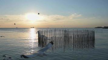 gaivotas voando ao nascer do sol video
