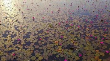 The lake of red lotus, Thailand