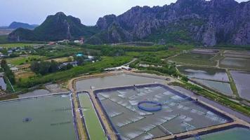 fazendas de camarão da Tailândia. tiro aéreo video