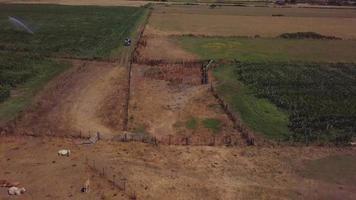 Luftaufnahme zeigt Kühe und Traktor video