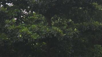 o vento soprando em uma árvore