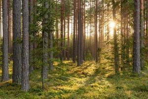 Escena del bosque con suelo cubierto de musgo en Letonia foto
