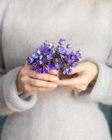 Women's hands holding bunch of blooming kidney wort flowers photo