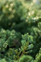 Textura de fondo de musgo verde hermosa en la naturaleza foto