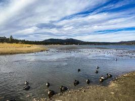 patos en un lago en otoño