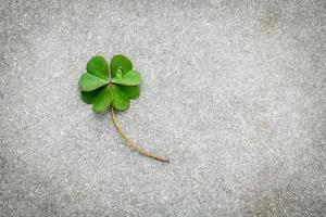 Clover on concrete with copy space photo