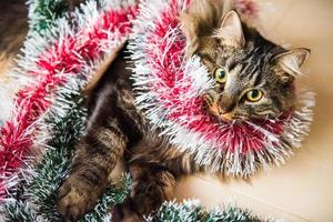 Portrait of Norwegian cat with garlands under Christmas tree