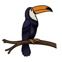 A vector illustration of a toucan parrot