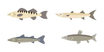 Set of river fish. Fish isolated on white background. Vector illustration.