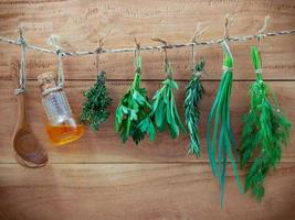 Various herbs hanging on shabby wooden background