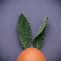 naranja y hojas foto