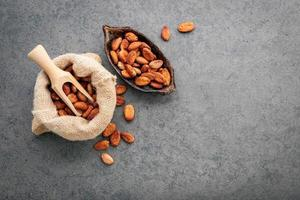 granos de cacao en concreto foto