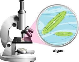 Microscopio con estructura de anatomía de algas sobre fondo blanco. vector