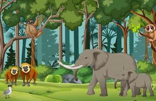 Rainforest scene with wild animals vector
