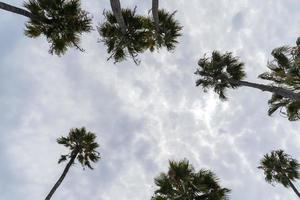 opinión de ángulo baja, de, palmeras, en, un, día nublado