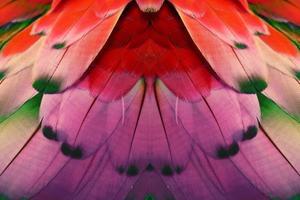 plumas de colores para el fondo o la textura