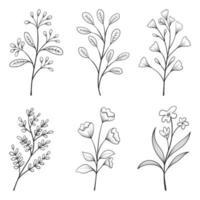 colección de hierbas y flores silvestres y hojas aisladas sobre fondo blanco. vector