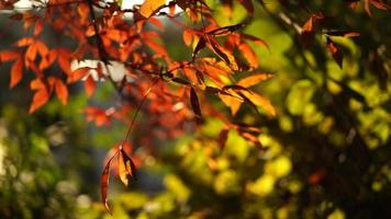 Natural Background with Red Leaves