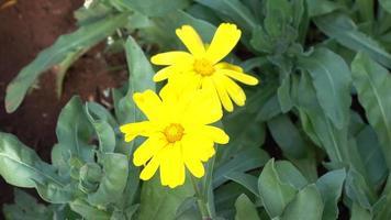 flor amarilla en el parque