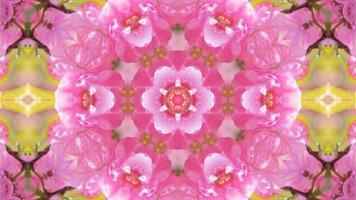 Fondo de caleidoscopio romántico abstracto con patrón floral video