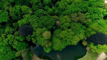 Aerial top view summer green forest video
