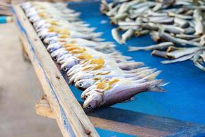 Close-up of a row of fish with stacks of headless fish in the background