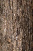 primer plano del tronco del árbol foto