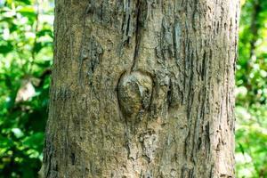primer plano, de, tronco de árbol, en, bosque foto