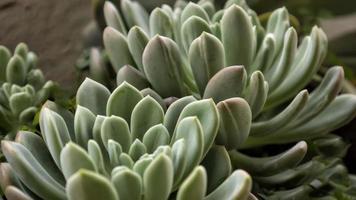 Succulent plants close up