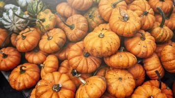Close up of tiny pumpkins