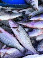 Close up of fish in a market