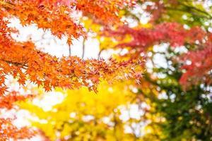 Red maple leaf tree
