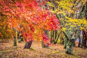 Beautiful maple leaf tree in autumn