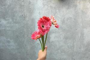 Hand holding pink flower on grey wall background photo