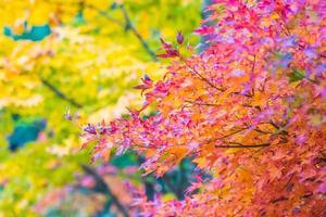 Beautiful maple trees in autumn