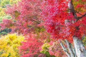 Beautiful maple tree in autumn