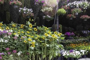 hermoso vivero de plantas