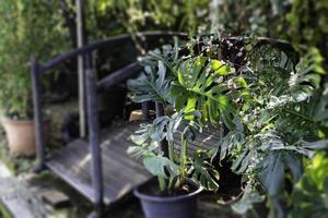 hermosas plantas en el jardín