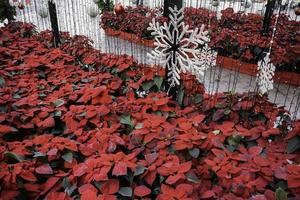 Poinsettias and snowflake decorations
