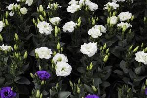 flores blancas en el jardin