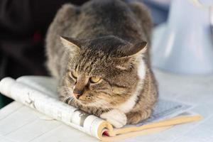 retrato, de, un, gato, acostado, en, un, revista foto