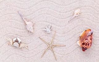 Top view of seashells on sand photo