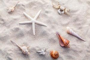 Seashells during the day photo