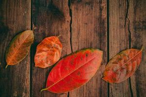 Red leaves on wood photo