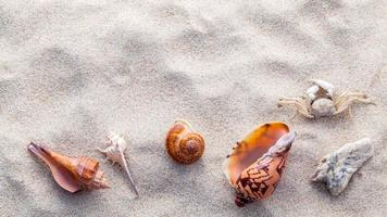 Seashells at the beach photo