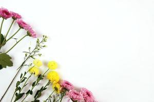 Chrysanthemums on white background photo
