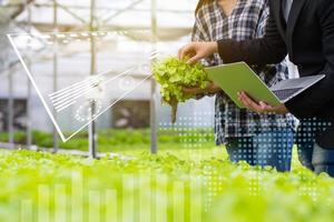 Hydroponic farm with researchers photo
