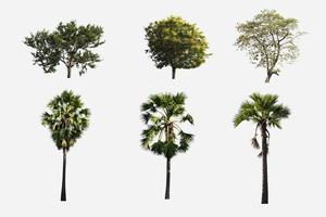 grupo de árboles aislados sobre fondo blanco foto