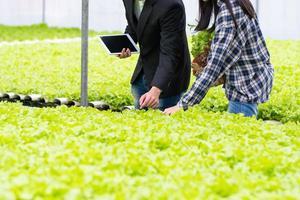 agricultores mirando cultivo de lechuga foto