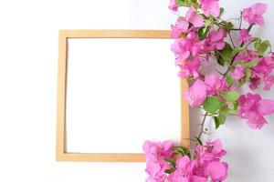 Blank frame with plant on white background photo